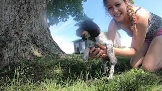 How we capture photos of 7 week old puppies!!