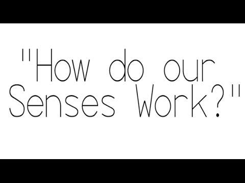 How do our Senses Work? -the Five Senses-