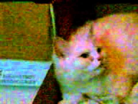 Pertanda Kucing Yang Mau Melahirkan Funnycat Tv