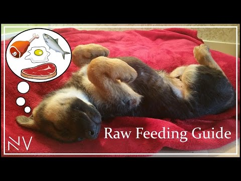 Complete Guide To A Raw Diet For Dogs | NerdVlog