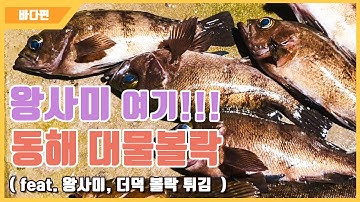 [다리tv] 왕사미 잡고싶은 분 요기!!! 포항 볼락 선상낚시!!! ☆ 대물볼락 도전 포인트 ☆