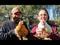 We NEED Your INPUT!  Freedom Ranger vs. Cornish Cross Meat Chickens...Just the FACTS!!