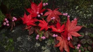 聖林寺の秋