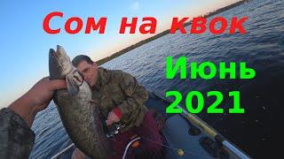 Сом на квок Волга Июнь 2021