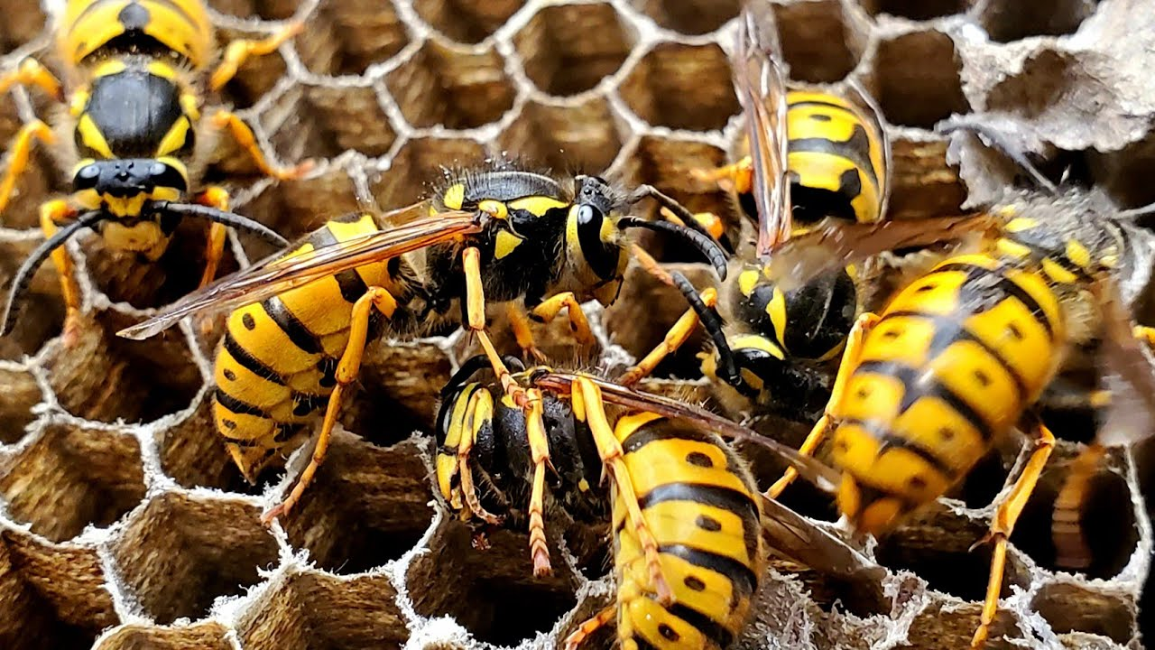 Yellow Jacket Nest in Ground | WASP NEST REMOVAL 2020 | Squirrel chases Turkey!