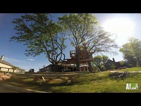 Time Lapse: Birds Nest Treehouse Build   Treehouse Masters