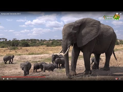 19-day Kenya and Tanzania African Wildlife Safari (2017)