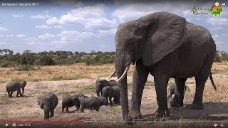 19-day Kenya and Tanzania African Wildlife Safari (2017)