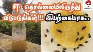 ஈ தொல்லையிலிருந்து விடுபடுங்கள்!!! இயற்கையாக | Get rid of house flies naturally @ home