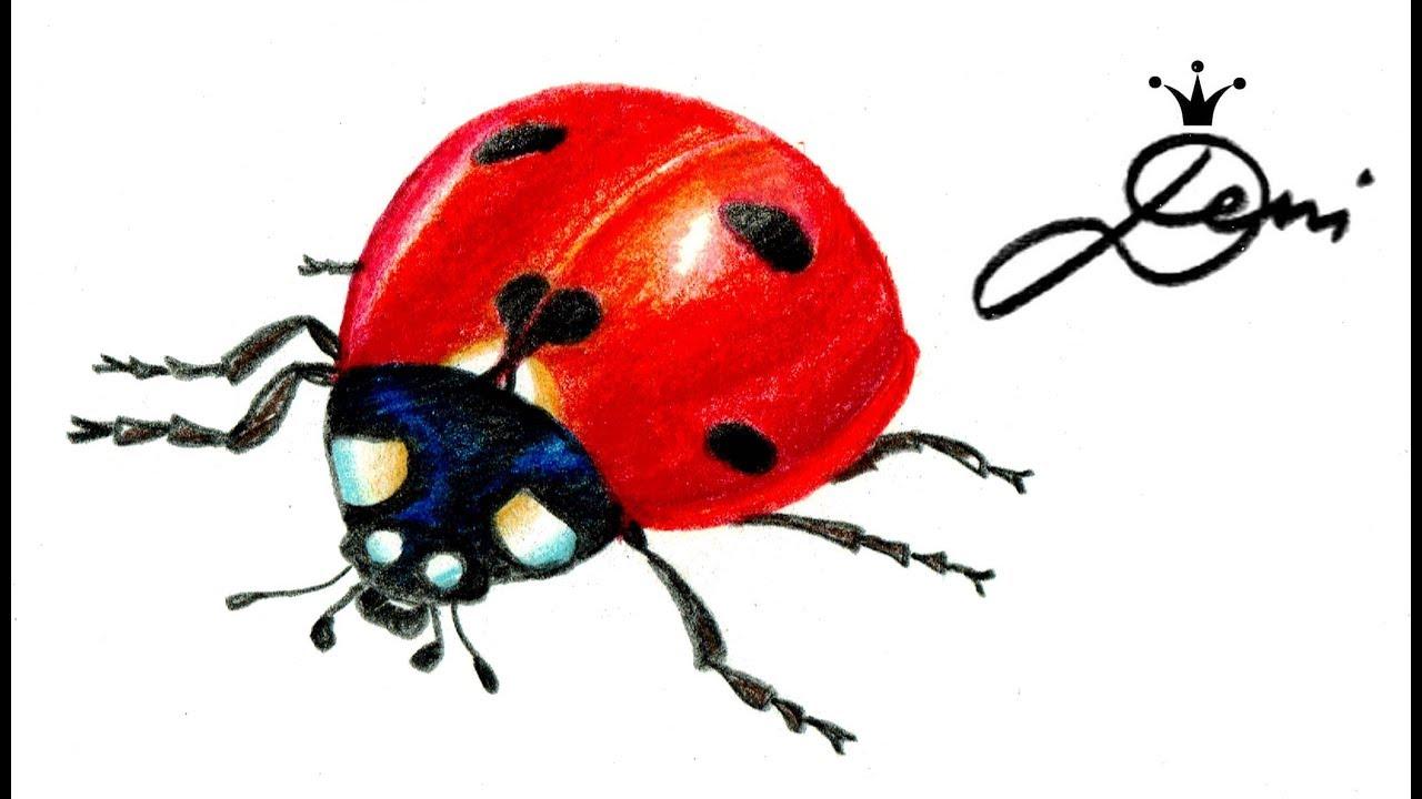 Marienkäfer zeichnen lernen 🐞 How To Draw A Ladybug 🐞