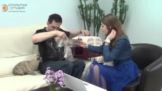 Эфир от 03.10.15 Бурманские Кошки