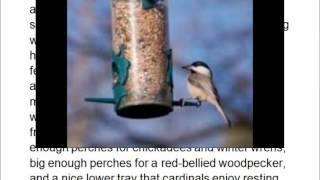 Wild Bill's 12 Station Squirrel Proof Bird Feeder