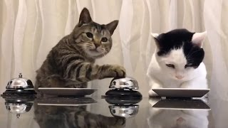 BELL RINGING CATS! | What's Trending Now!