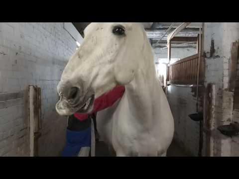 Вопрос: Что любят лошади?