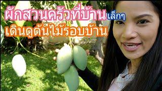 บ้านที่ไทย เดินดูผัก ผลไม้ / กินมะม่วงเบา แซบมาก /ไทยแลนด์/c.k.taylor