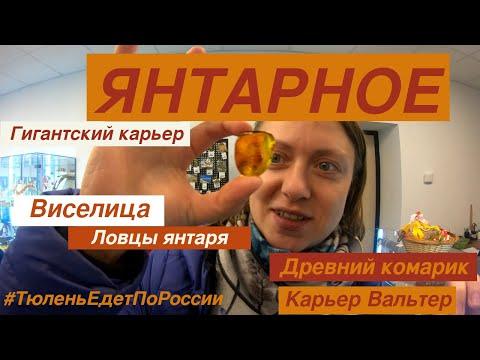 Янтарь в Янтарном и древний комарик из янтарного карьера - и это в Калининграде! Едем с TulenTravel