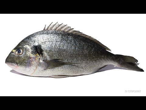Fish Eaten By Maggots Timelapse