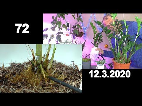 zimmerpflanzen.-welt-der-wunder-entdecken-im-pflanzenreich-und-neues-erleben