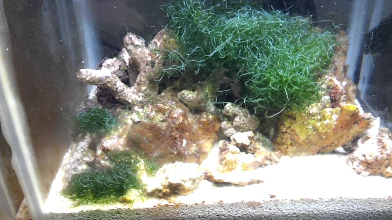 how to stop alge from forming in fish tank