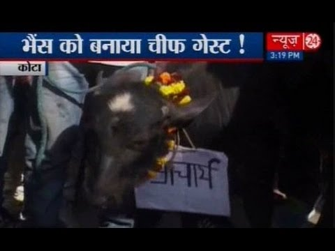 Buffalo replaces principal to inaugurate students union office in Kota