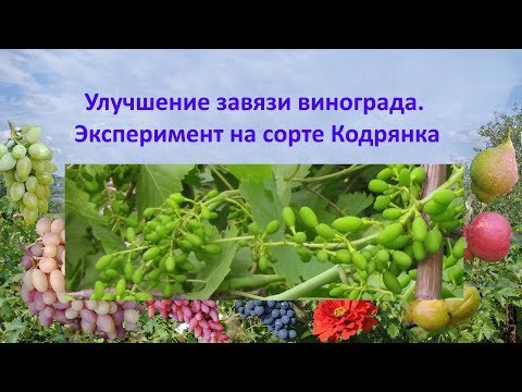 Вопрос: Какие сорта винограда склонны к осыпанию завязи?