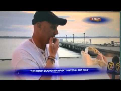 John Carlson talking sharks on WJHG TV 3/26/15