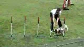 Спорт собак №02