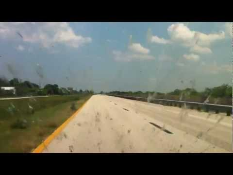 Florida Love Bugs Destroying A Car