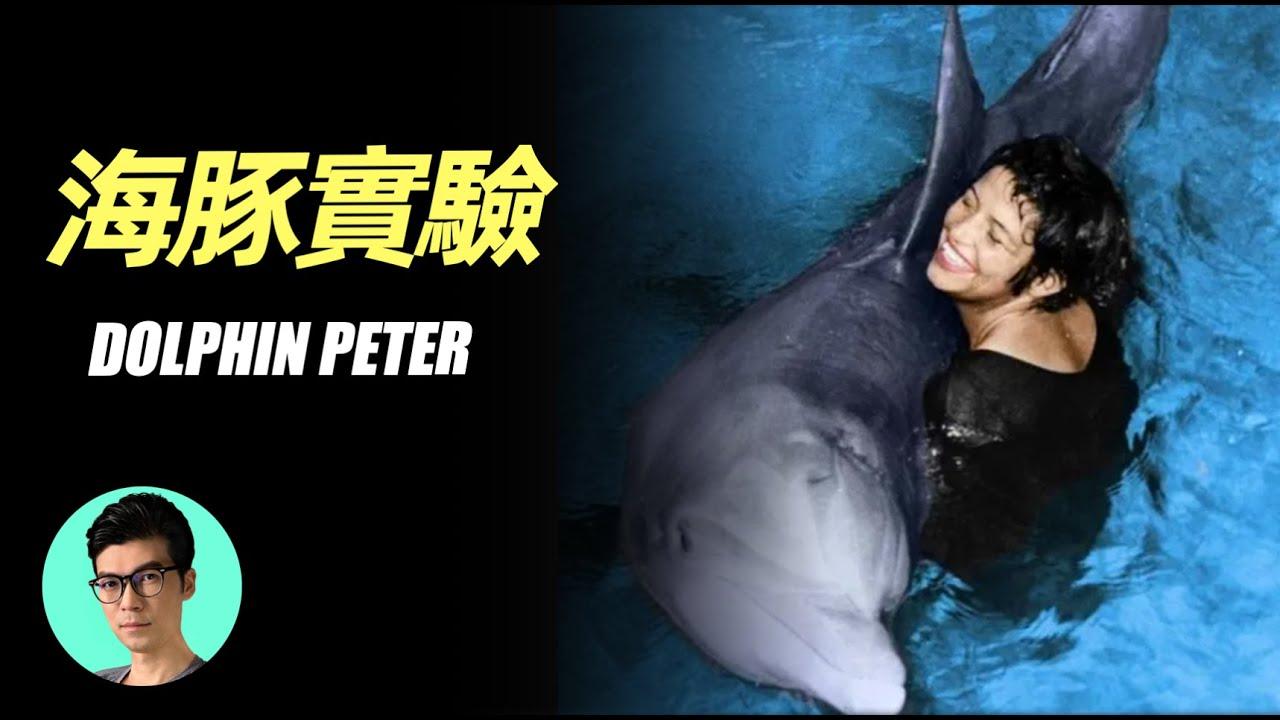 美國NASA的絕密海豚實驗,60年後終於公開的跨物種之戀「曉涵哥來了」