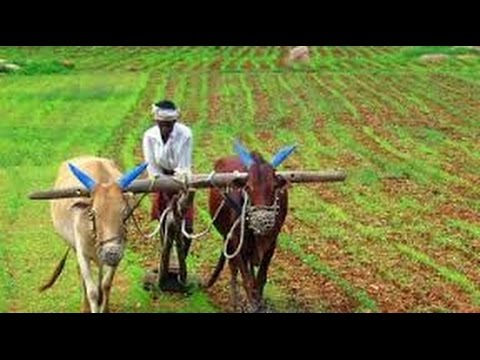 Govt Extends Subsidy Offered On Interest Rates To Farmers !!!