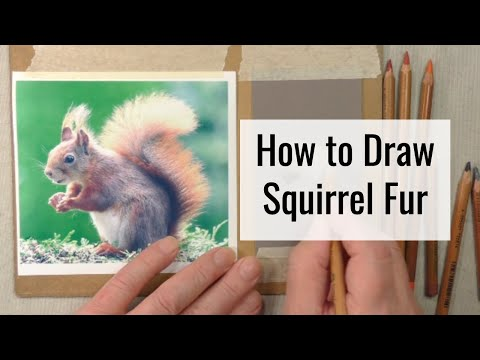 How To Draw Squirrel Fur