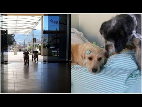 Nobody was sure why This two dogs stay near the entryway of the hospital
