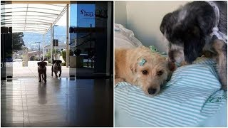 Nobody was sure why These two dogs stay near the entryway of the ho...