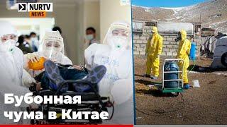 Бубонная чума в Китае: местные власти закрывают деревню