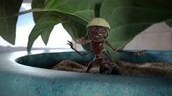 Ant Control | Arizona Pest Control