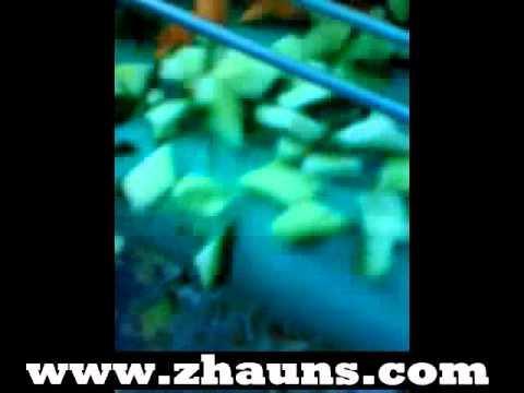 zhauns vegetableslice promo