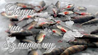 Поехали за плотвой и щукой а наловили окуня Зимняя рыбалка на безмотылки