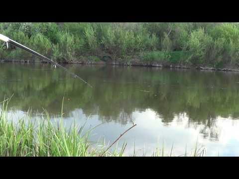 ловля щеклеи видео
