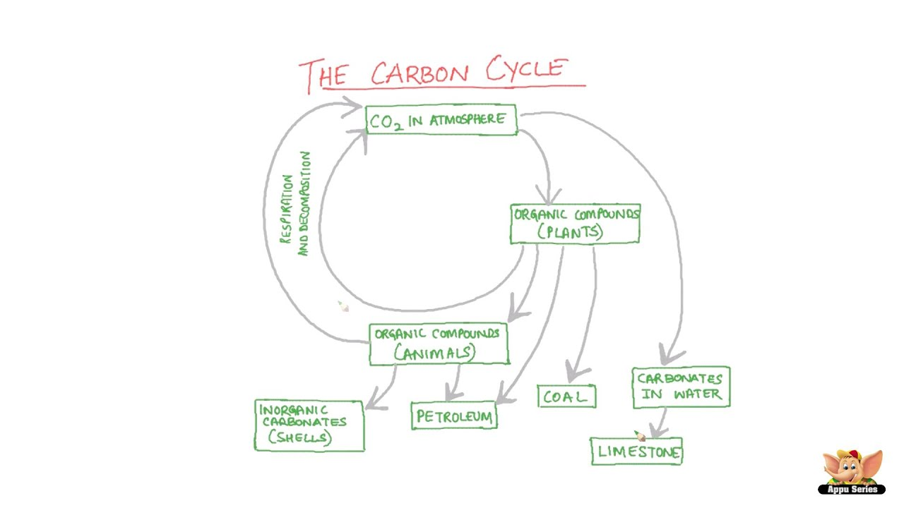 medium resolution of carbon cycle