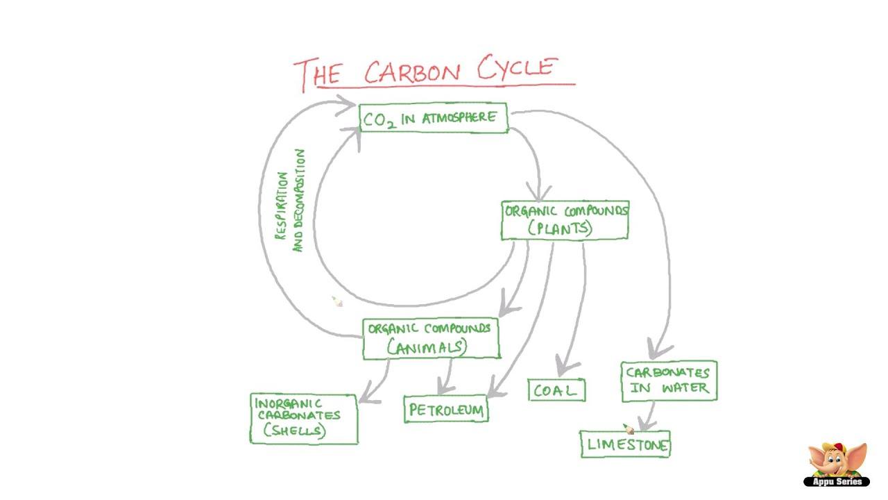 carbon cycle [ 1280 x 720 Pixel ]