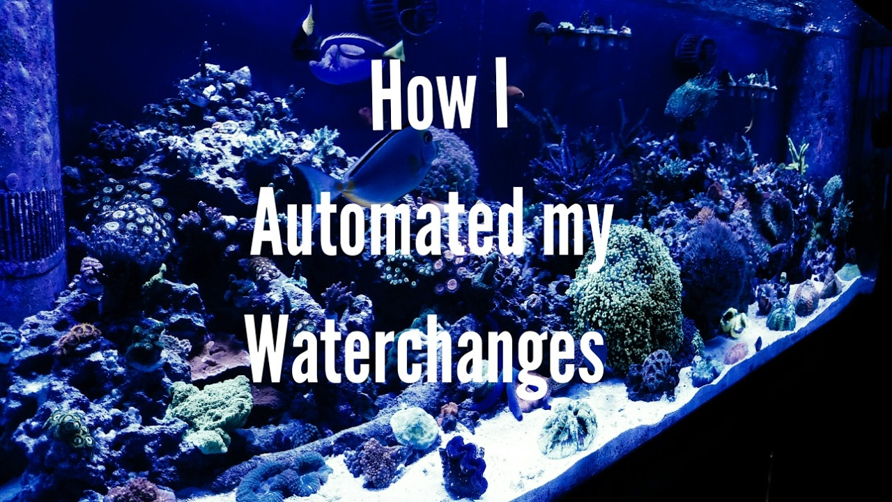 how i automated my water changes by tha bizness reef tank