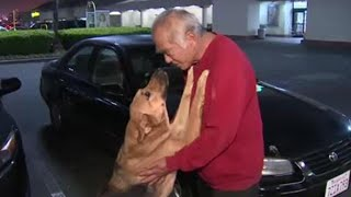 Man Whose Car Was Stolen With Dog Inside Was Thrilled to Get His Pet Back thumbnail