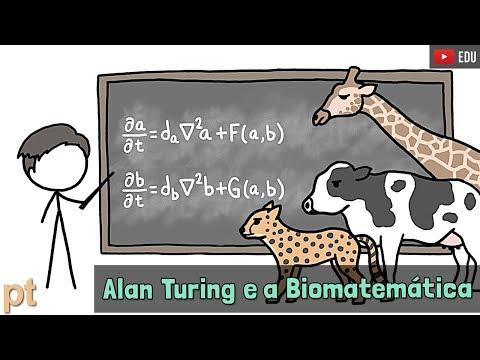 como-a-matemática-explica-as-manchas-e-listras-dos-animais?-|-minuto-da-terra