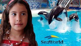 Um dia com os Golfinhos e Baleias do Sea World - Rotina de Férias