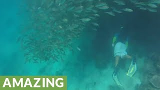 Snorkelers discover massive school of fish in the Philippines