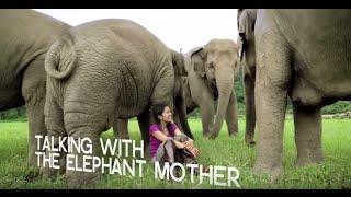 Inspiring Elephant Sanctuary activist in Chiang Mai - WTTV