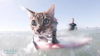 Sugar the surfing dog and Mavrick the Surfing Cat  Pasea Hotel