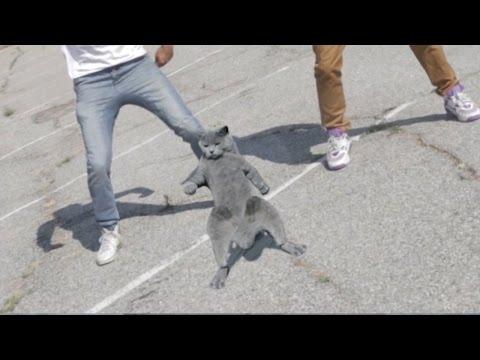 Aaron's Animals - Cat Whips it.