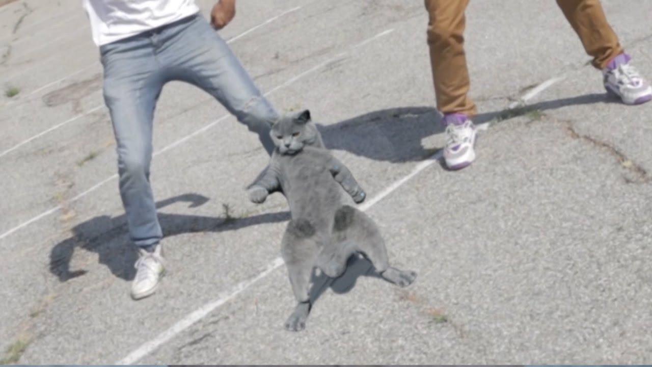 aaron s animals   cat whips it funnycat tv