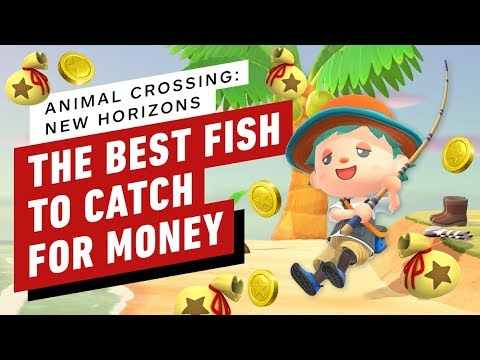 Animal Crossing New Horizons: The Best Fish to Catch for Money - IGN